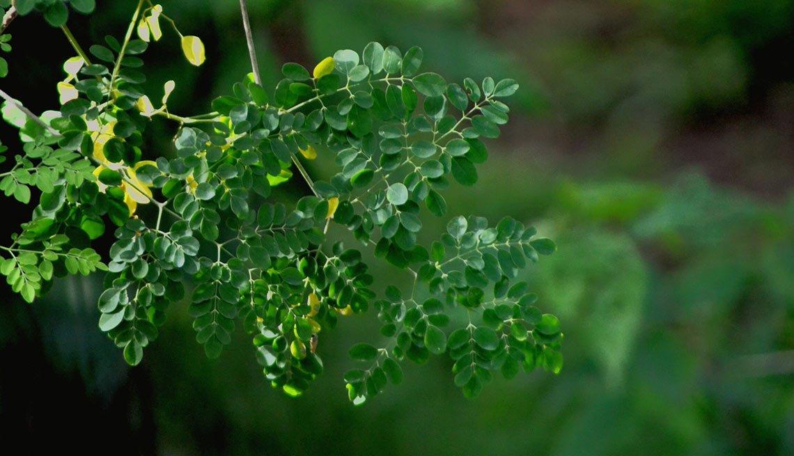 Moringa - Alimentos raros pero nutritivos