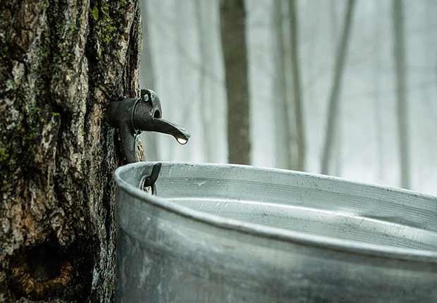 Agua de arce - Alimentos raros pero nutritivos
