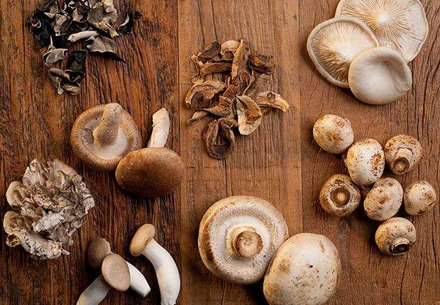 Distintos tipos de hongos