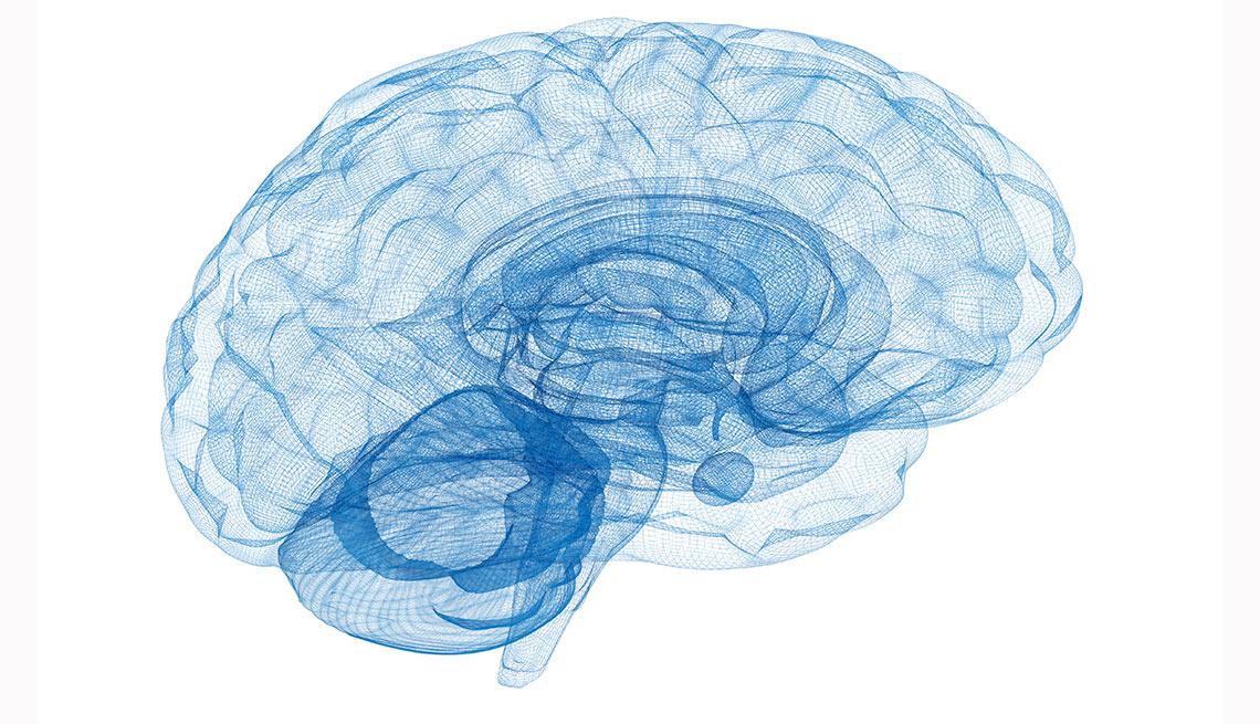 Modelo de alambre Cerebro