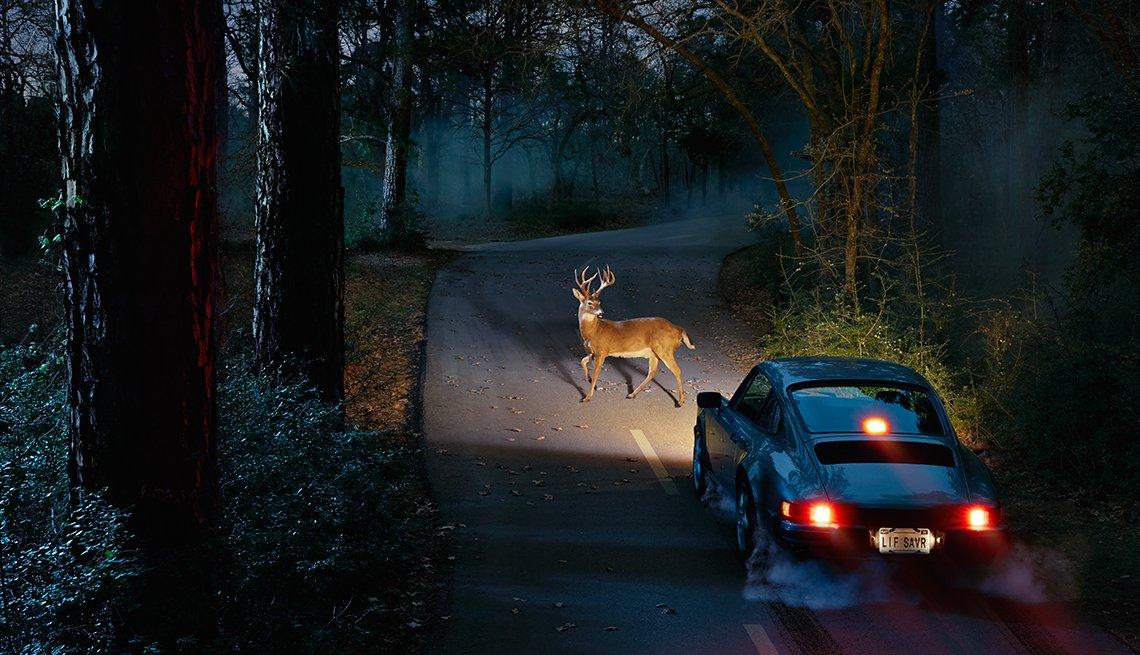 Venado en el medio de la carretera