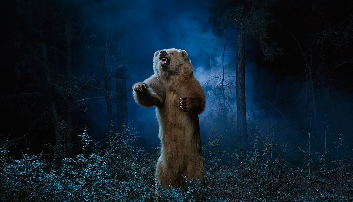 A bear in a forest at night, Save Your Life In 5 Minutes