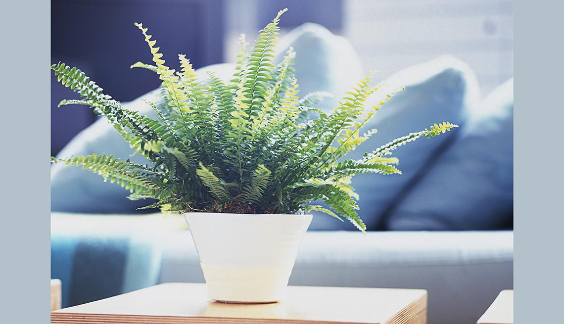 Planta decorativa en la sala del hogar