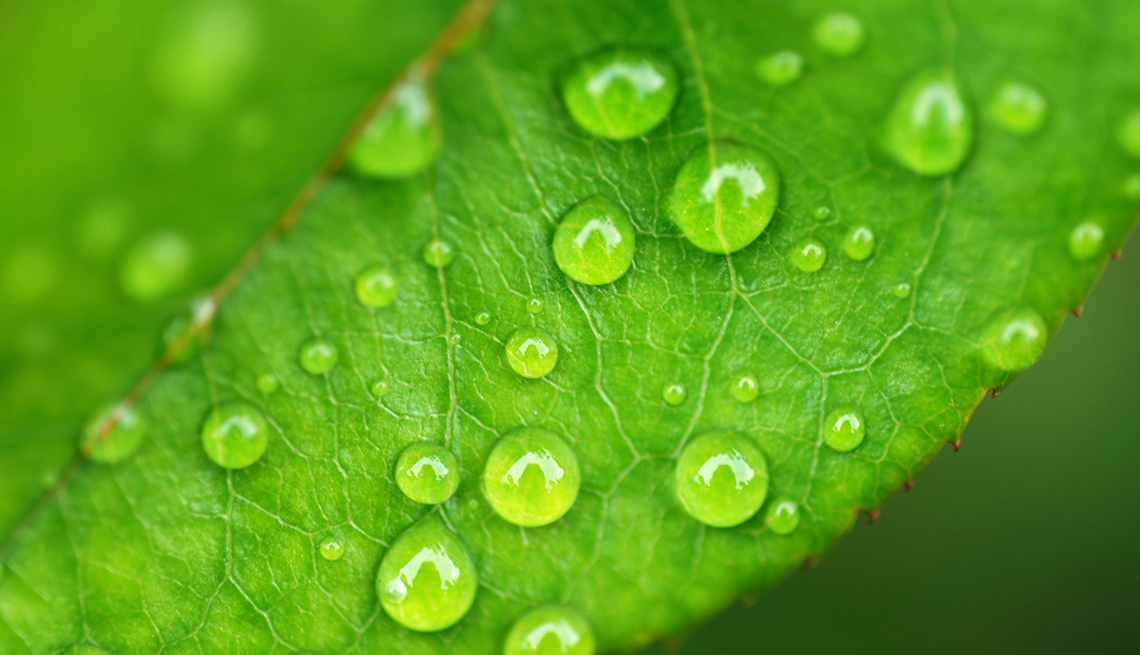 Water drops on leaf closeup, 7 Reasons to Have More Sex After 50