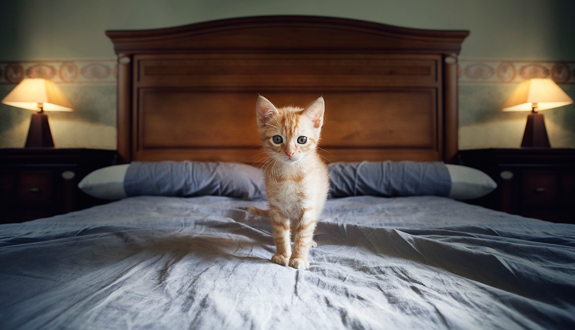 Gatito sobre la cama