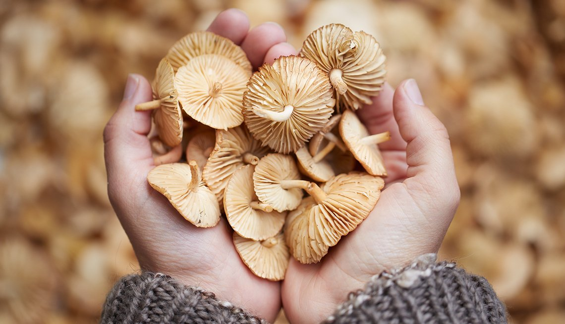 mushrooms are the new superfood