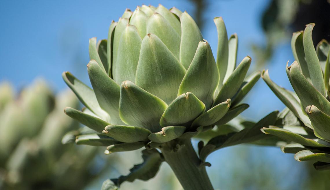 Alcachofas en su planta