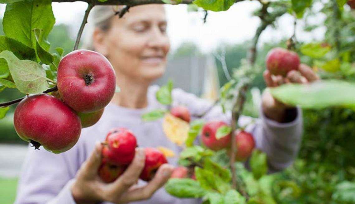 Mujer recogiendo manzanas