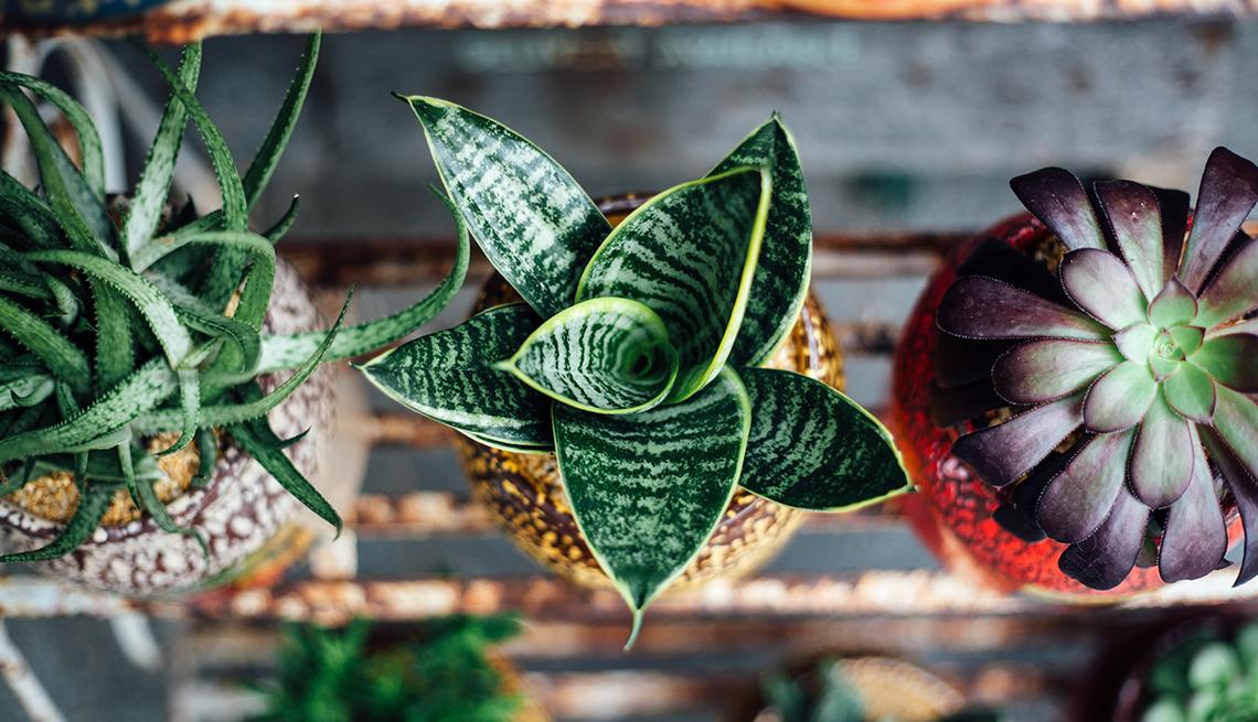 House Plants Clear Air