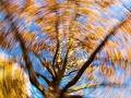 Árbol con hojas de otoño, foto fuera de foco