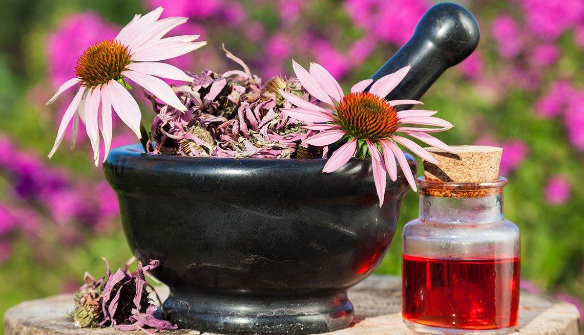 Molcajete con flores de equinácea y aceite en un frasco
