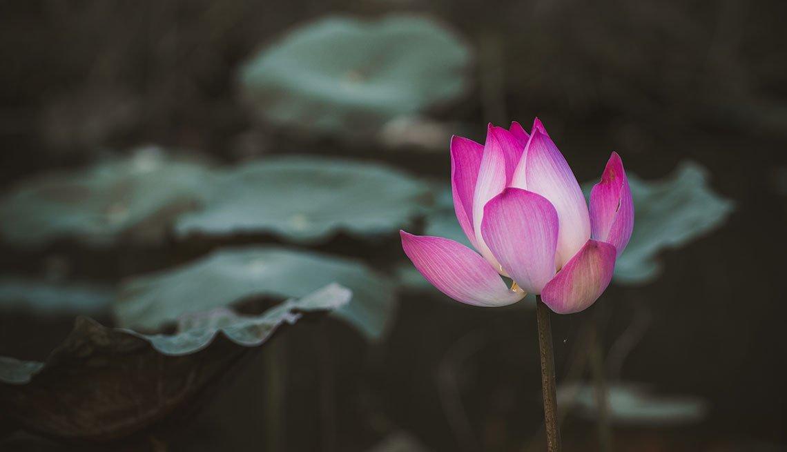 Flor renaciendo