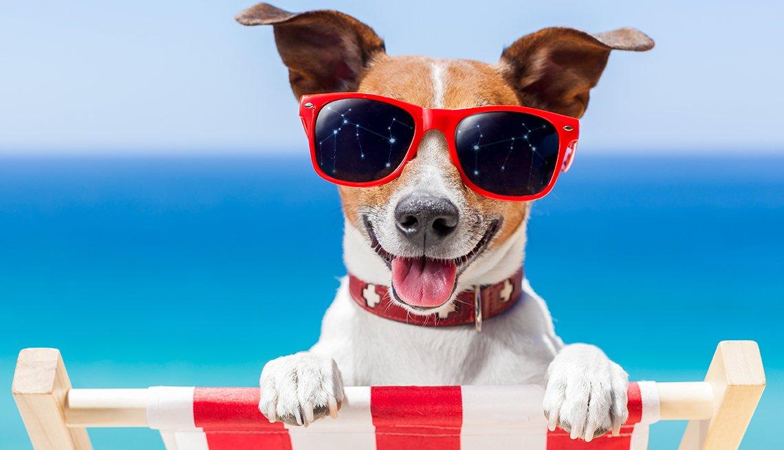 A dog wearing sunglasses on a beach chair