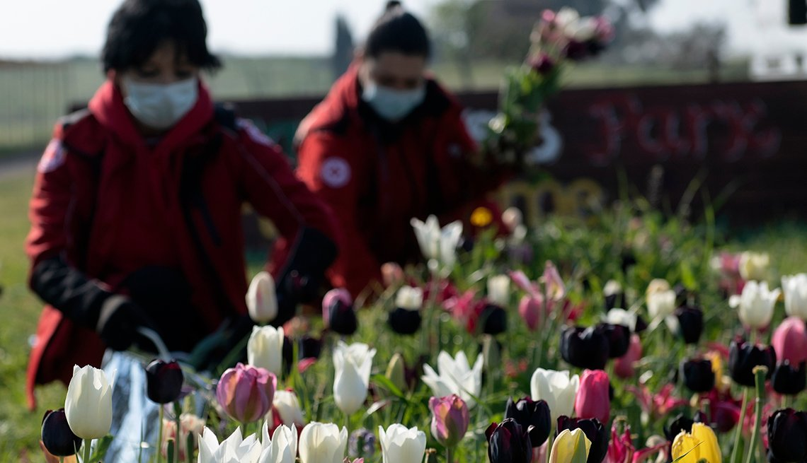 item 6 of Gallery image - Voluntarios de la Cruz Roja recogen tulipanes en un parque de Roma