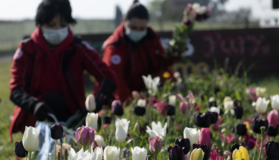 item 7 of Gallery image - Italian Red Cross volunteers wearing sanitary masks to protect against the novel coronavirus, COVID-19, pick tulip flowers in the Roma Flowers Park  in Rome on April 8, 2020.