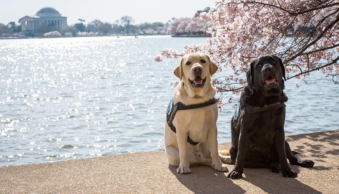Perros del FBI Wally y Gio
