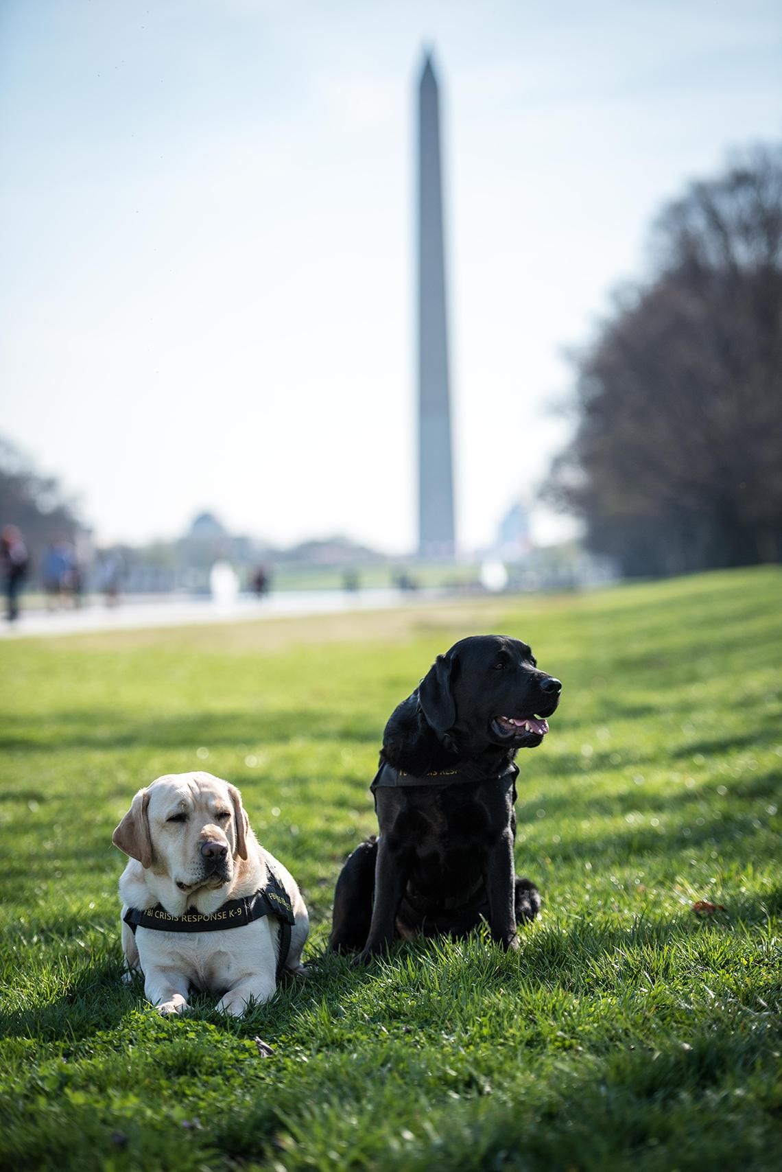 Perros de respuesta ante crisis, del FBI, Wally y Gio