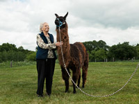 Marie Waite and Travis, the llama, Life Care Center of Nashoba Valley