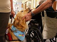 A trained dog visits residents in a nursing home. (Kanwarjit Singh Boparai/Alamy)