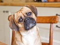 10 razones para tener un perro después de los 50