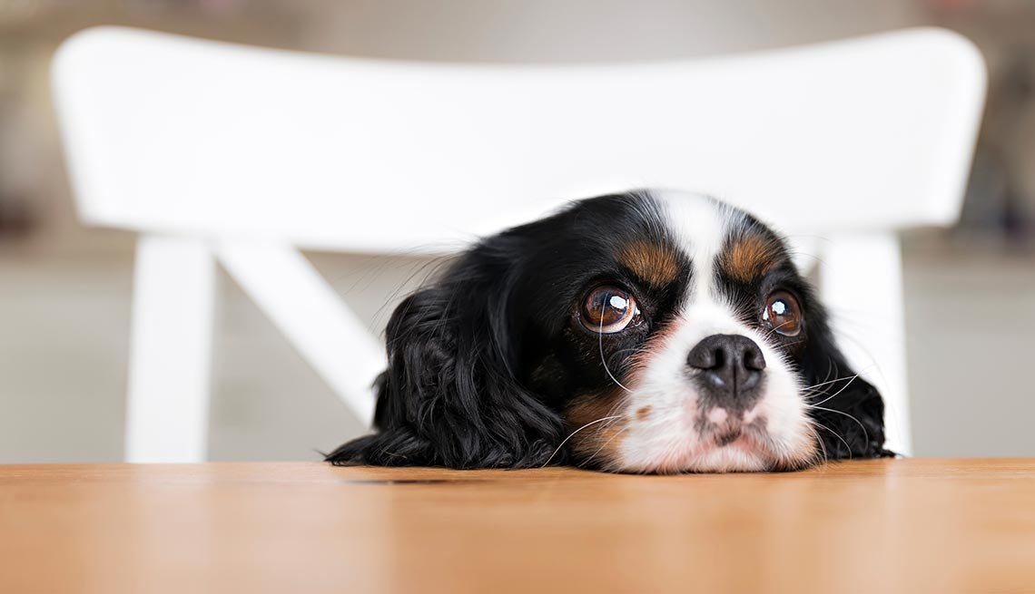 5 Surprising Foods That Can Poison Pets