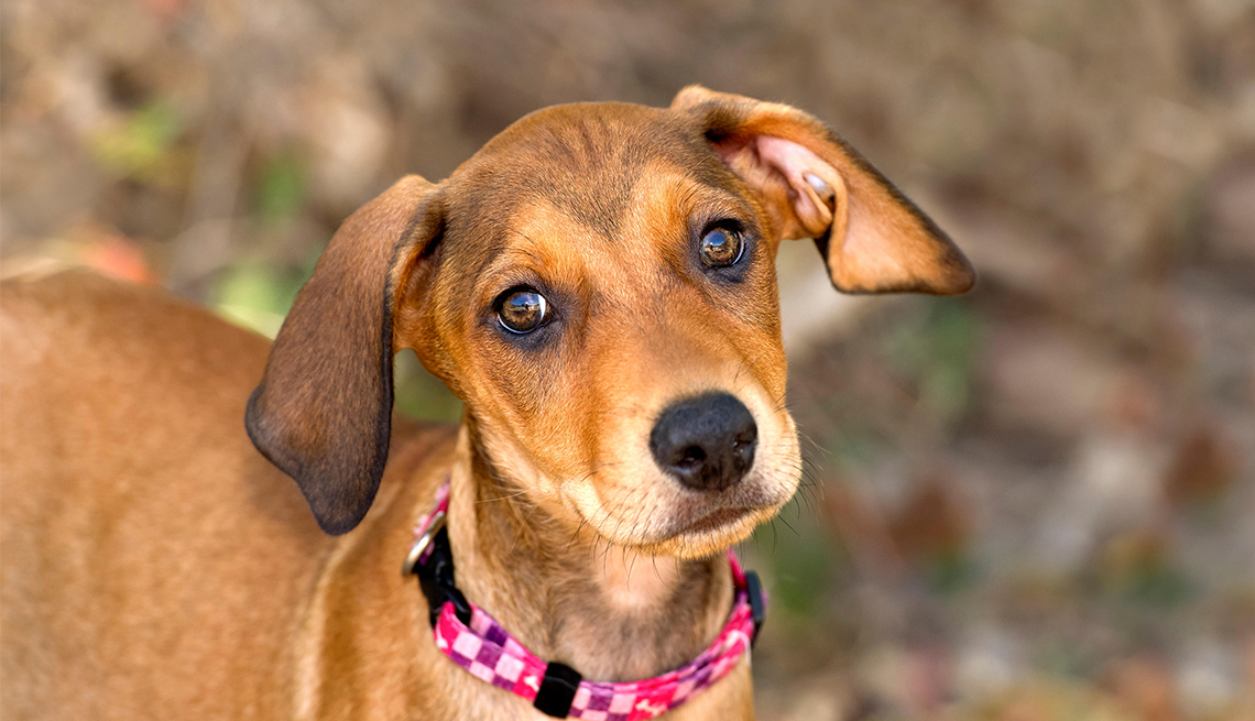 Tips for Taking Care of Fido After You Can't