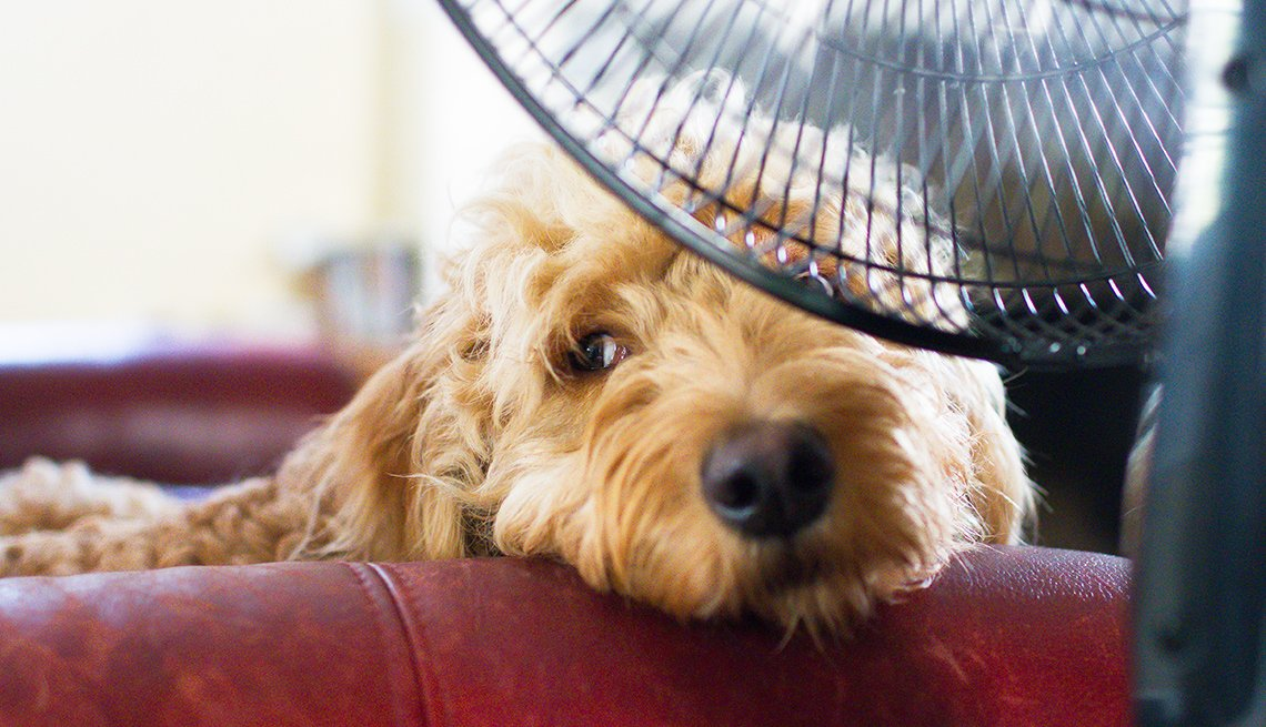 Keeping Pets Safe in the Summer
