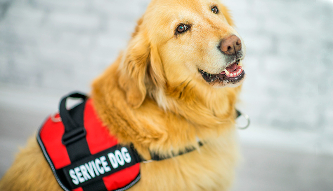 States Crack Down On Pets Posing As Service Animals