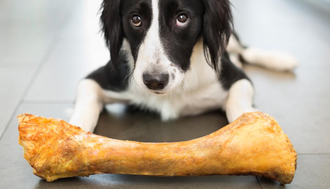 Fda Warns About Dangerous Dog Bones