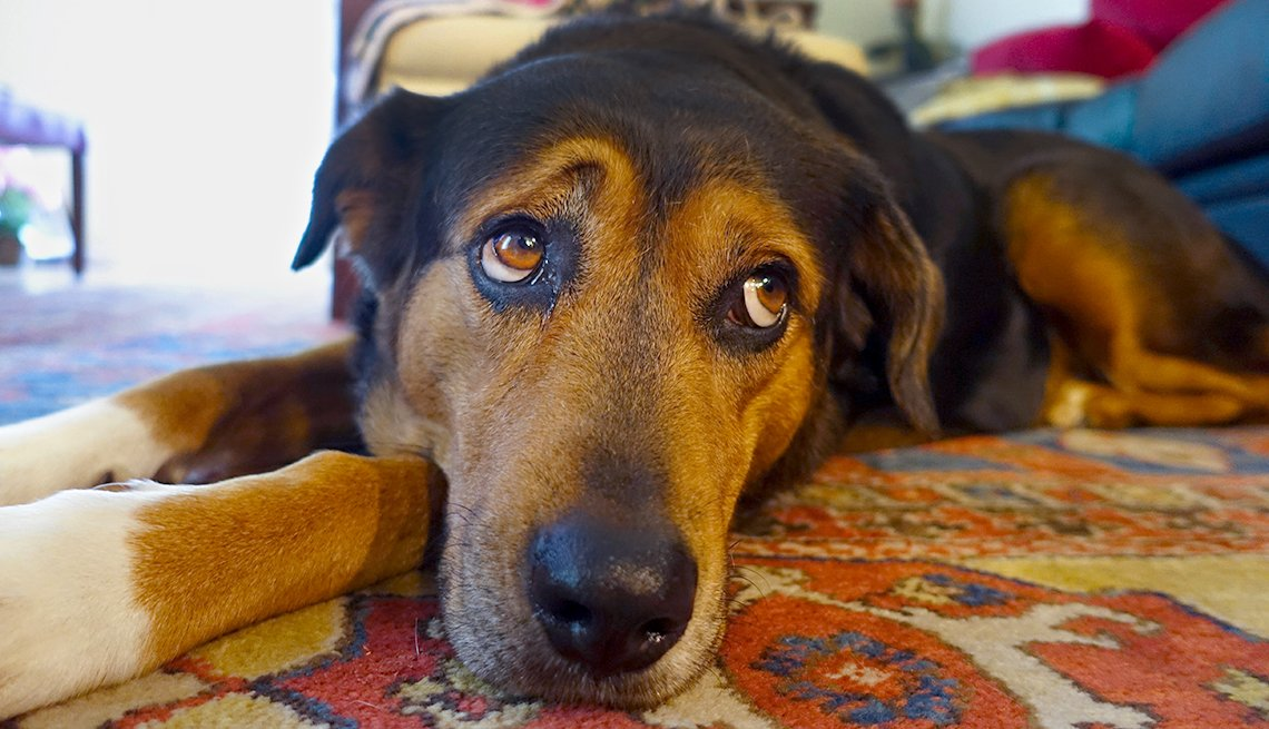 sad dog at home alone