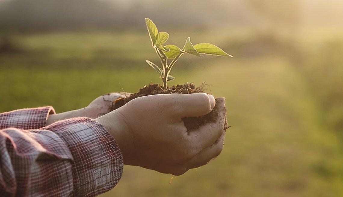 Manos sosteniendo un puñado de tierra con una pequeña planta sobresaliendo