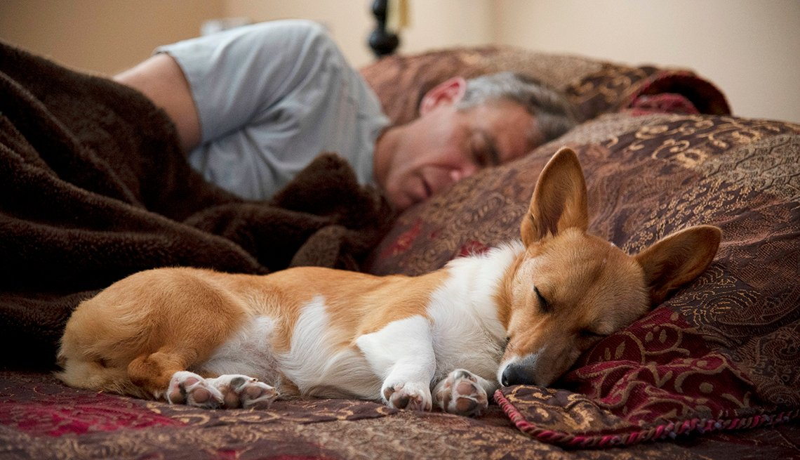 a man sleeps in bed with his dog next to him sleeping and leaning its head on the other pillow