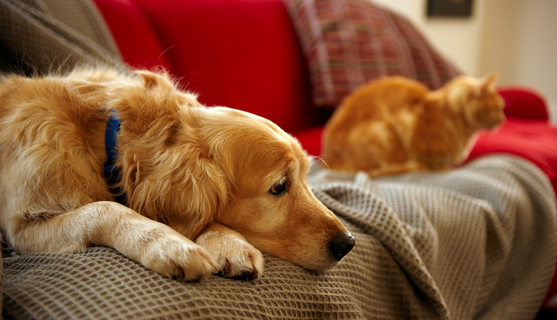 Dog and cat sitting on a couch, looking sad