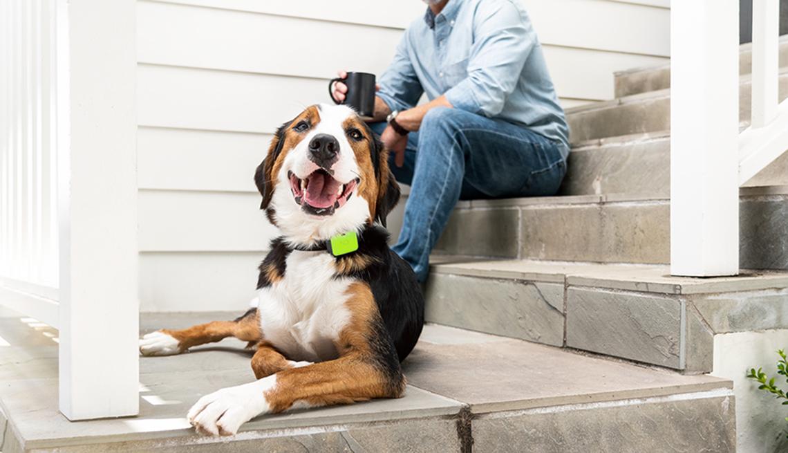 Dog wearing Whistle Pet Device