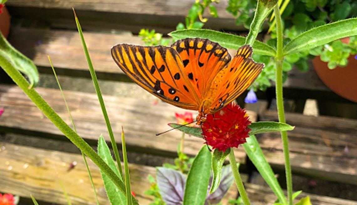 Mariposa se posa sobre una flor en el jardín