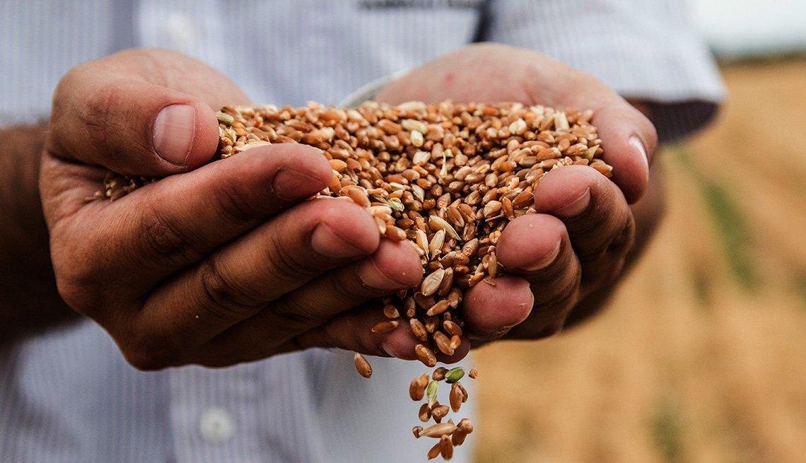 Una persona sosteniendo en sus manos semillas de trigo
