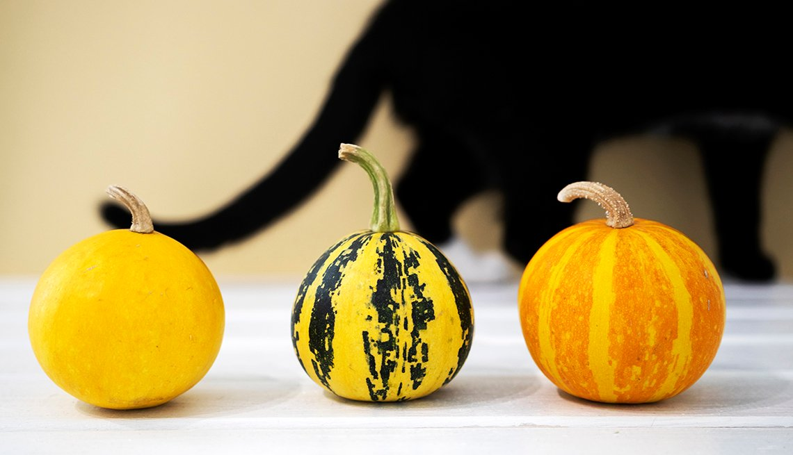 Orange Small pumpkin with black cat on backround. Top view, Copyspace, Haloween flatlay concept.