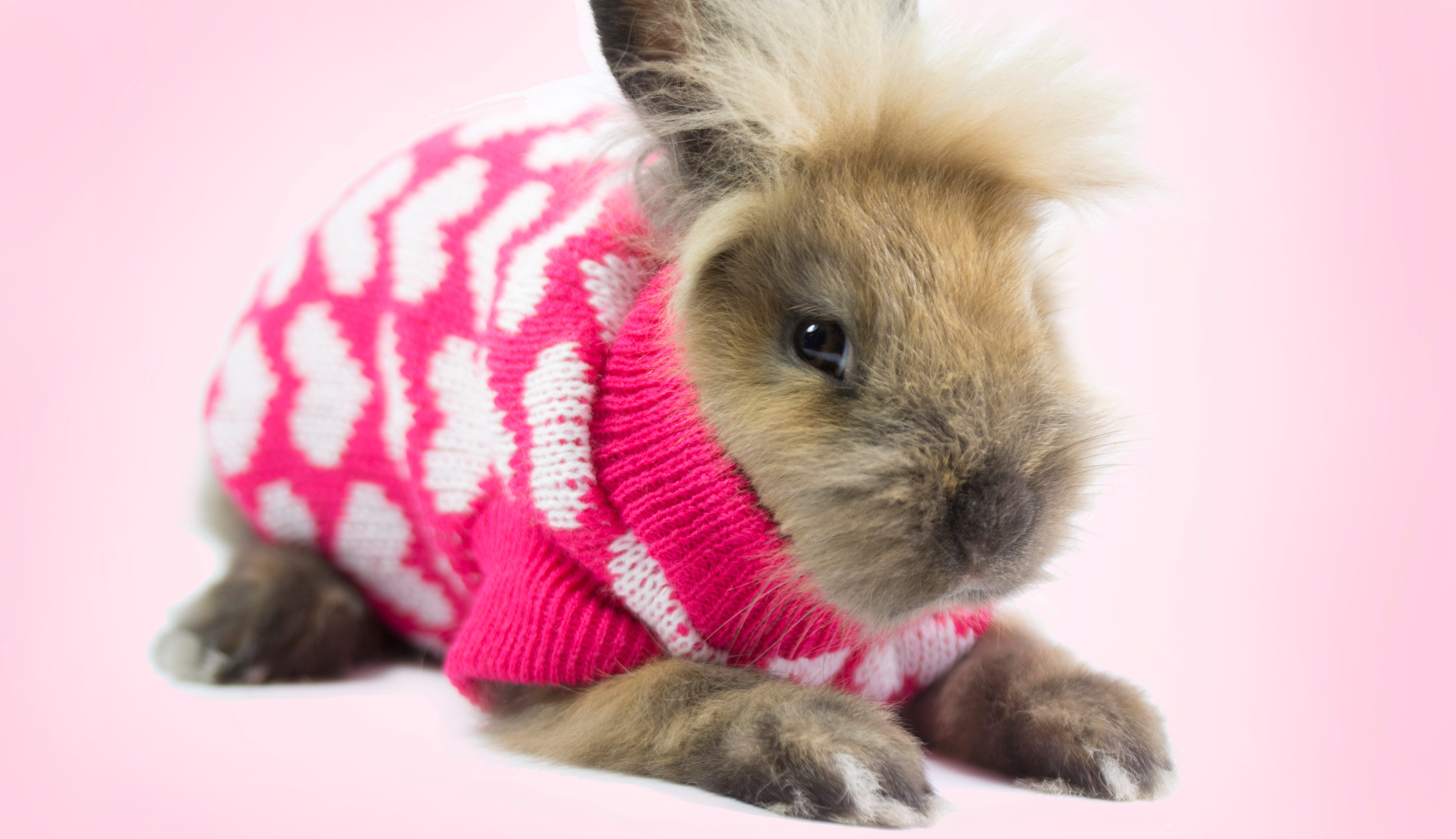 10 Pet Gift Ideas For Dogs Cats Rabbits And More