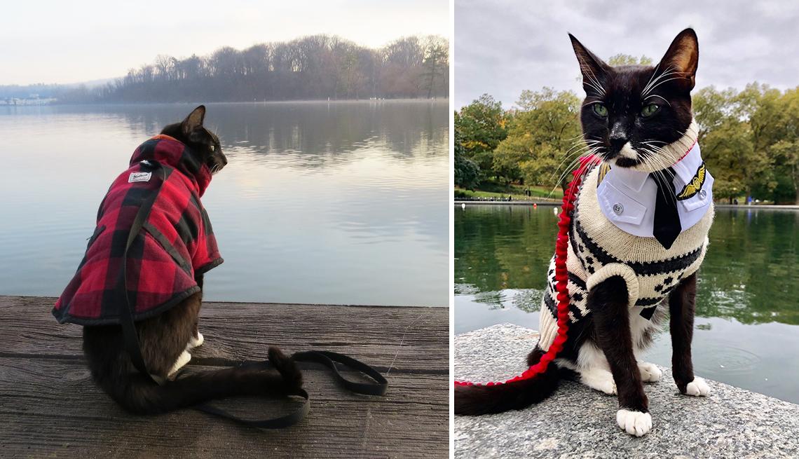Sushi, un gato con correa