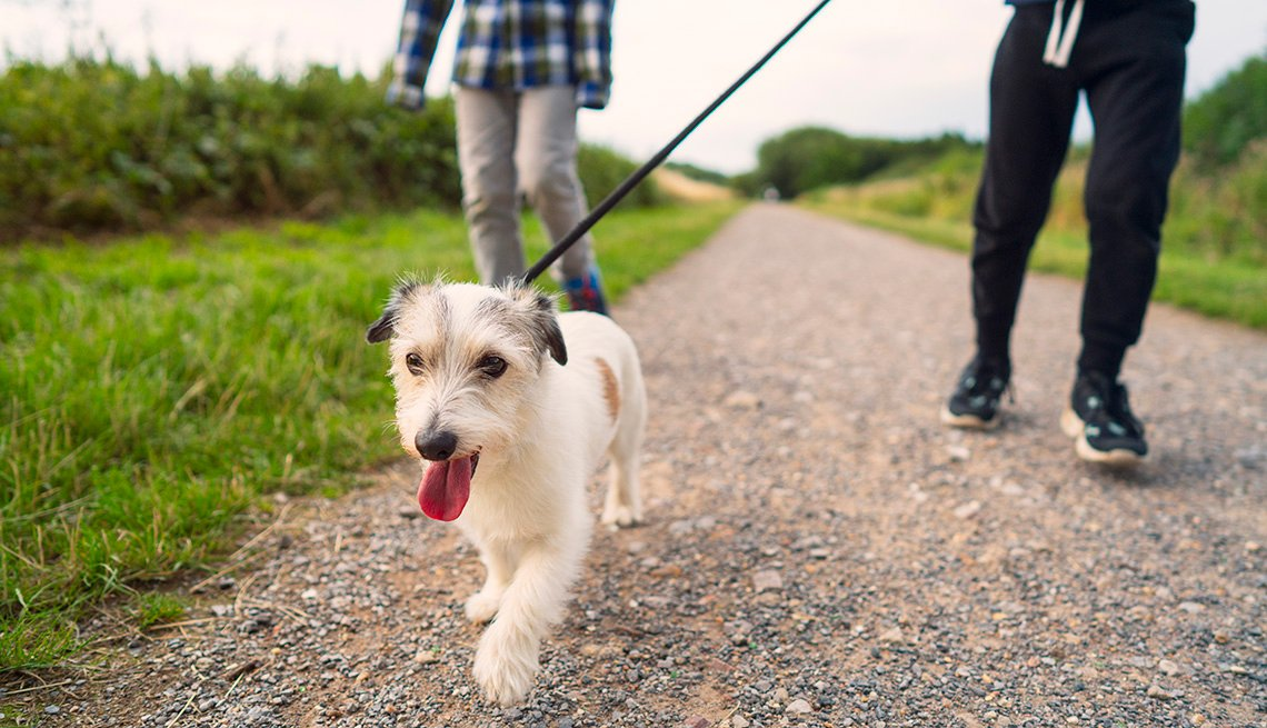 Low angle view of a small dog being walked by two young brothers in a park.