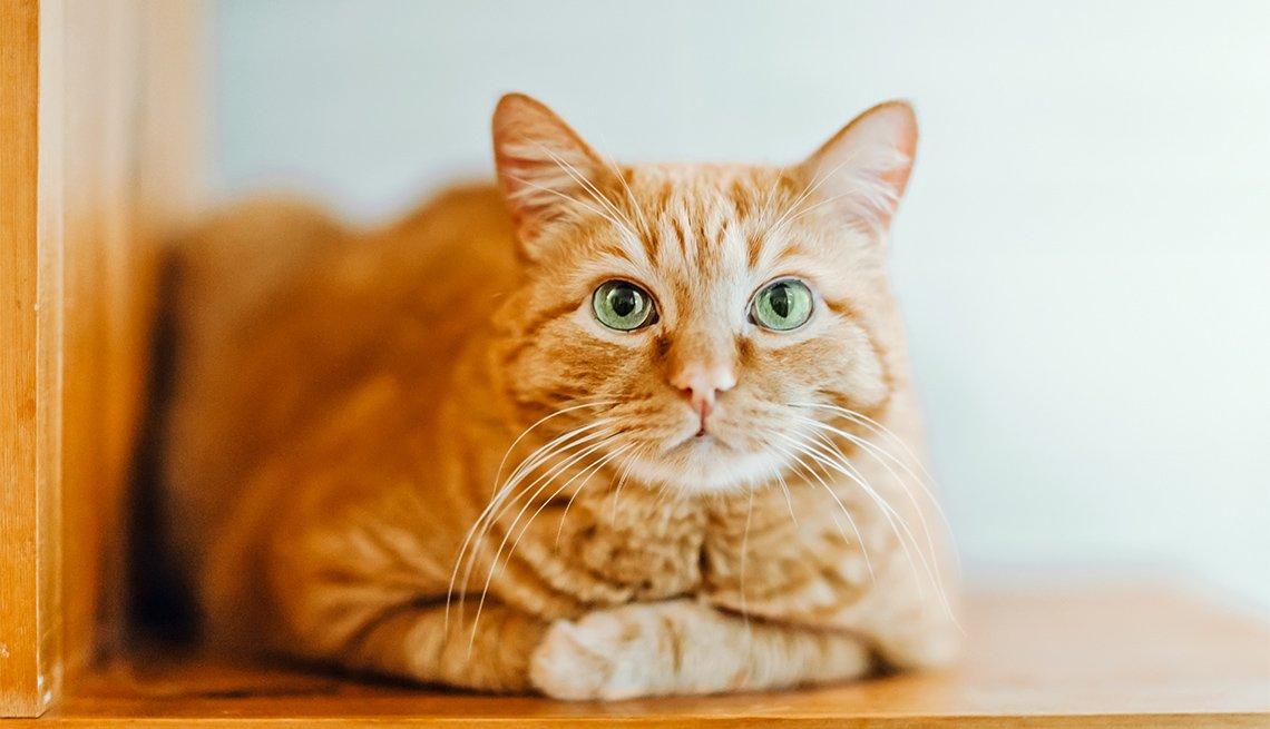 Gato sobre una silla de madera