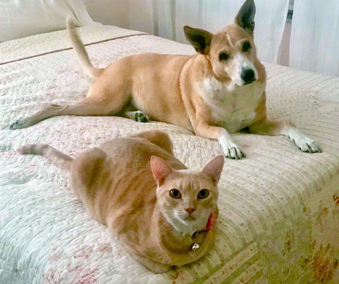 Un gato y un perro acostados sobre una cama