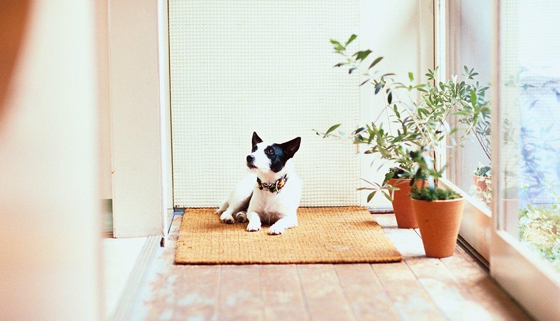 Un perro blanco sobre una alfombra en un pasillo iluminado