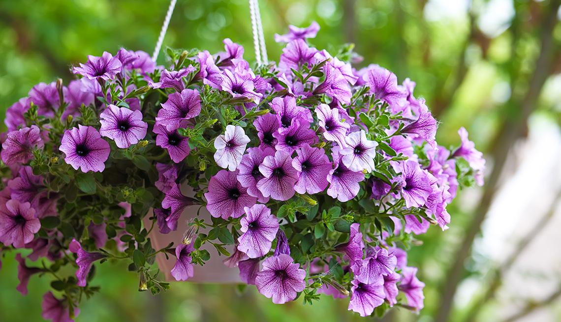 Cesta colgante con unas flores de color morado
