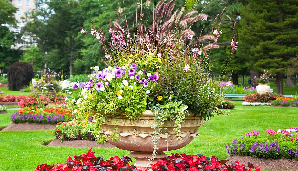 Variedad de plantas se observan en un pedestal de piedra
