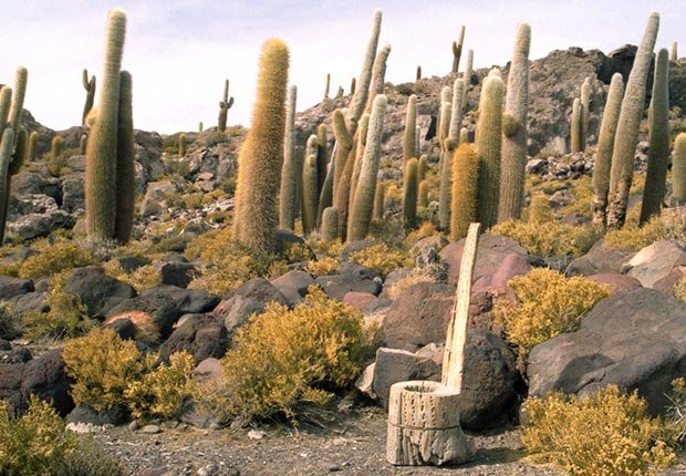 A toilet carved from the trunk of a dried cactus on Incahuasi Isand, Unyuni Salt Flats in Bolivia - toilets around the world