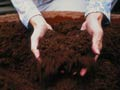 Primer plano de unas manos sosteniendo abono - 5 ideas económicas para hacer su propio compost