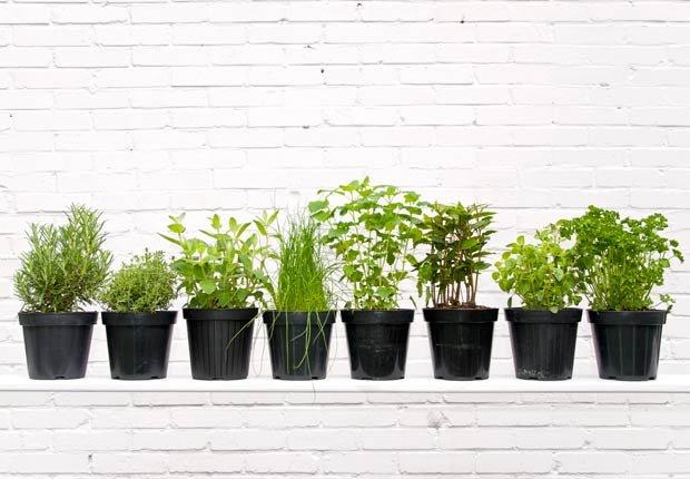 Plantas, 10 Ideas de decoración para las próximas vacaciones