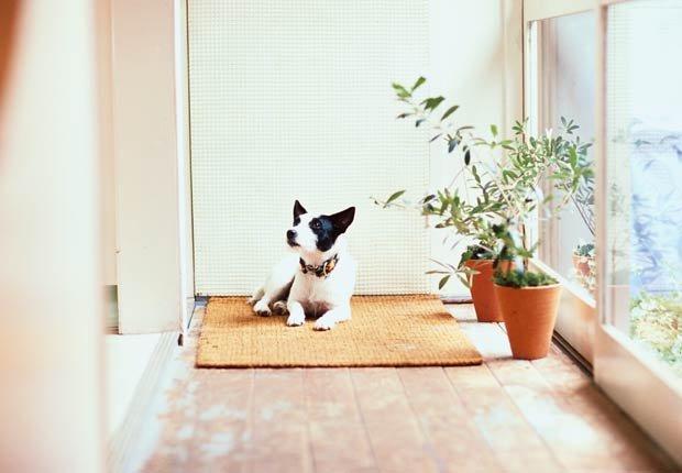 Felpudo, 10 regalos para decorar su hogar