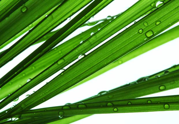 Palma Areca, 10 plantas que ayudan a limpiar el aire en su hogar